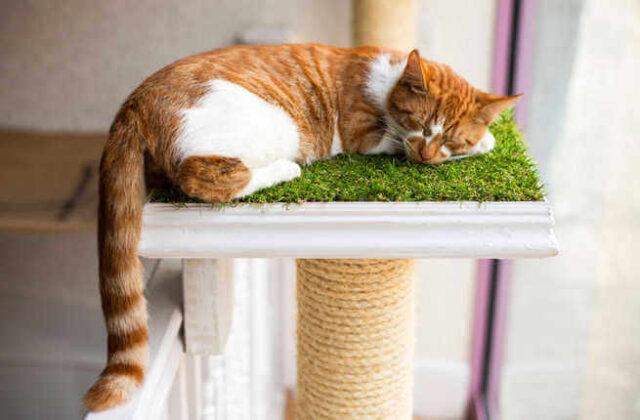Best Cat Cafés Around the World